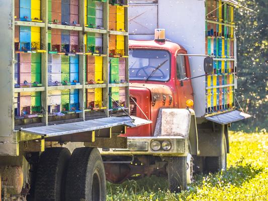 mobile-beehive-on-trucks-PGMCFYX-1-1