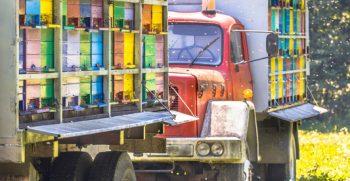 Compra de camiones usados en Murcia
